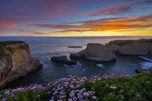 Фотографии Штаты Рассветы и закаты Берег Маргаритка Скалы Горизонт Shark Fin Cove Природа