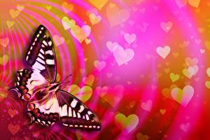 Фотографии День всех влюблённых Бабочка Сердце Papilio machaon животное