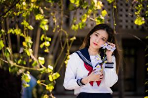 Картинки Азиатка Блузка Галстук Школьницы Смотрит Девушки