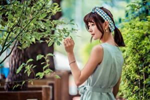 Фотография Азиаты Ветки Листья Шатенка девушка