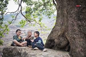 Картинка Азиаты Три Мальчики Сидит Лысый Ветвь Дети