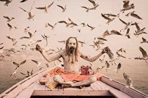 Обои Птицы Чайка Поза лотоса Мужчины Лодки Животные картинки