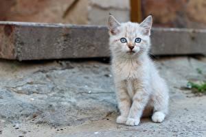 Картинки Коты Котята Сидит Смотрит