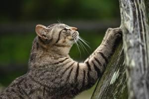 Фото Коты Лап Размытый фон животное