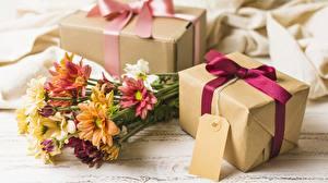 Картинка Хризантемы Букет Подарков Коробка цветок