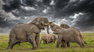 Картинка Слоны HDR Животные