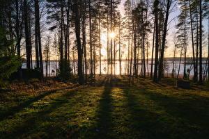 Картинки Финляндия Леса Озеро Деревья Lamposelkä, Rantasalmi Природа