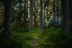Фотография Финляндия Лес Тропа Дерево Мхом Mynäjärvi