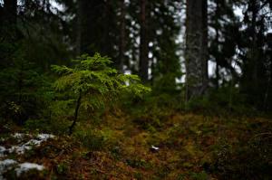 Обои Финляндия Лес Дерево Боке Mynäjärvi