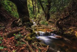 Картинки Греция Леса Ствол дерева Ручей Мох Athens Природа