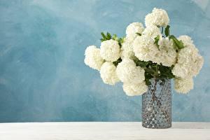 Обои для рабочего стола Гортензия Букеты Вазе цветок
