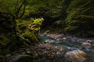 Фотография Япония Камни Мхом Ручеек Iya Valley Природа