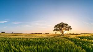 Фото Утро Рассветы и закаты Поля Небо Дерева Природа