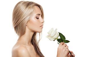 Картинки Роза Блондинка Модель Прически Косметика на лице Белый фон девушка
