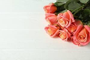 Фотография Розы Букет Доски Шаблон поздравительной открытки Розовая цветок