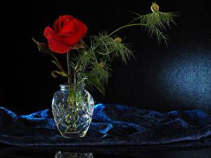 Фото Роза Ваза Ветки Красная Цветы
