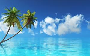 Фотографии Небо Море Океан Тропический Пальма Природа
