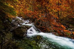 Фотография Испания Леса Осень Река Камни Деревьев Aragon, Salenques River, Posets-Maladeta Natural Park Природа
