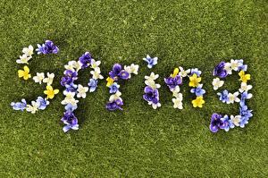 Фото Весенние Газон Английский Слово - Надпись Spring Цветы
