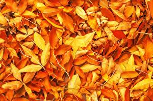 Фото Текстура Осень Лист Оранжевые Природа