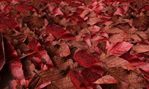 Фото Текстура Осенние Листья Красная Природа