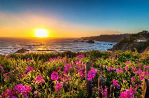 Картинки США Побережье Рассветы и закаты Калифорния Солнца Mendocino Природа