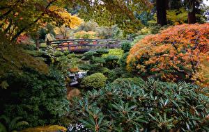Обои Америка Сады Мосты Кусты Ручей Portland Japanese Garden Природа