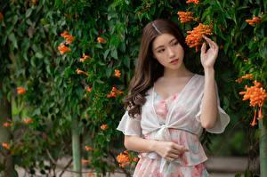 Обои Азиатка Шатенки Платье Рука молодые женщины