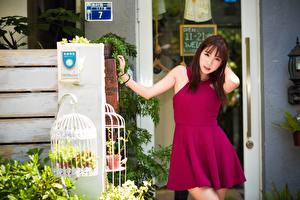 Фотографии Азиаты Платье Поза Девушки