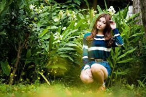 Картинка Азиаты Кустов Шатенки Сидящие молодые женщины
