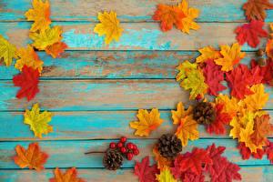 Картинки Осенние Клёна Шаблон поздравительной открытки Доски Листва