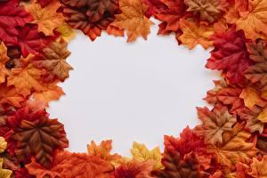 Обои Осень Шаблон поздравительной открытки Клёновый Лист