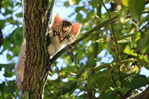 Картинка Кошки Ветка Листья Котенок Смотрит Животные
