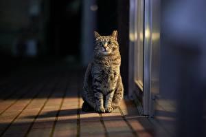 Картинка Кот Сидящие Смотрят Размытый фон