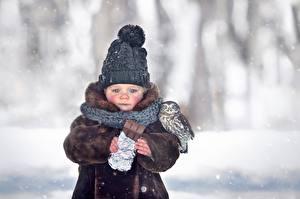Картинки Шоколадная плитка Птица Сова Зимние Шапки Грустный Боке Шарфом Marianna Smolina ребёнок