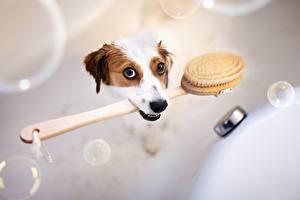 Фото Собаки Ванная Смешные животное