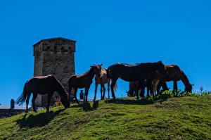 Обои Грузия Лошадь Башни Ushguli village, Svaneti Животные Природа