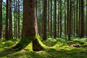 Фото Германия Леса Кора Бавария Дерево Мох Ствол дерева Gauting Природа