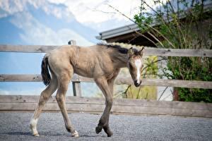 Фотографии Лошади Детеныши Животные