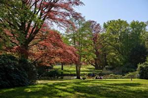 Картинка Нидерланды Парки Деревья Трава Graveland Природа