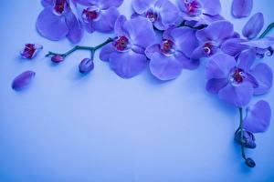 Фотографии Орхидеи Ветвь Лепестки Шаблон поздравительной открытки Фиолетовые цветок