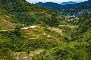 Картинка Филиппины Гора Поля Деревьев Сверху Banaue rice terraces, Ifugao Природа