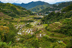 Фото Филиппины Горы Поля Деревьев Banaue rice terraces, Ifugao Природа