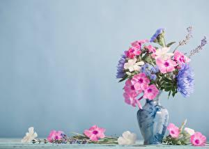 Фотография Флоксы Букет Ваза Цветной фон цветок