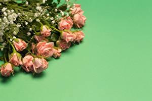 Обои Роза Букет Цветной фон Шаблон поздравительной открытки