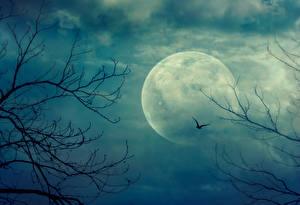 Фотографии Небо Луны Ветвь Природа