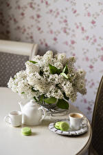 Обои Натюрморт Сирень Кофе Белых Чашка Макарон цветок Еда