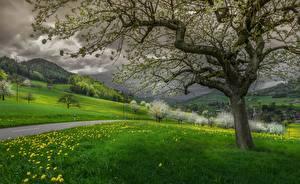 Фотографии Швейцария Гора Дороги Одуванчики Пейзаж Деревья Трава Облака Waldenburg, Basel-Land