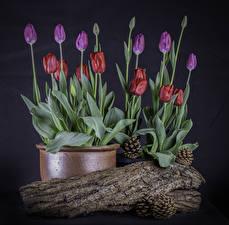 Картинка Тюльпан Цветочный горшок Шишка Бутон Цветы