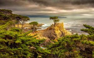 Фотографии США Побережье Калифорнии Облака Деревья Утес HDR Природа